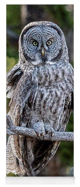 Great Grey Owl Yellowstone Yoga Mat