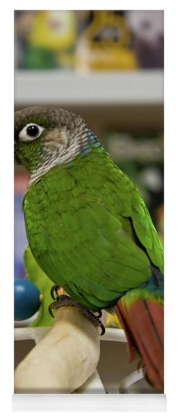 Green Cheek Conure Yoga Mat