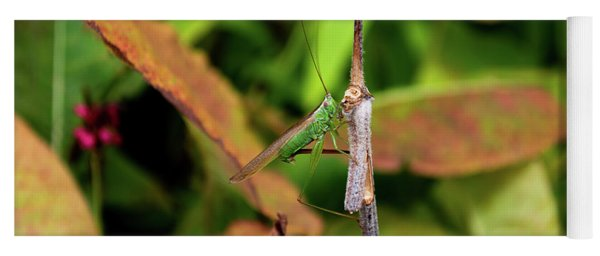 Yoga Mat featuring the photograph Green Conehead Cricket Holding Twig by Scott Lyons
