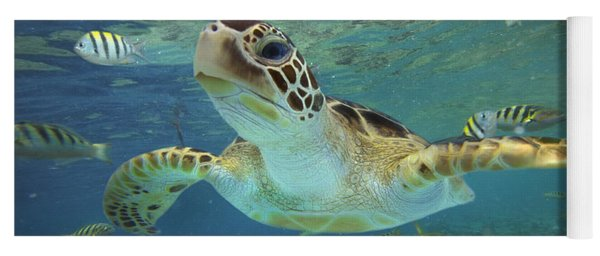 Green Sea Turtle Chelonia Mydas Yoga Mat