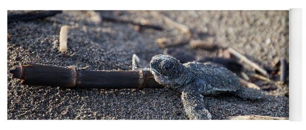Green Sea Turtle Hatchling Yoga Mat