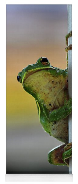 Green Tree Frog  It's Not Easy Being Green Yoga Mat