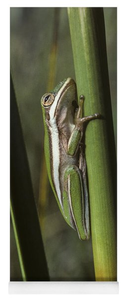 Yoga Mat featuring the photograph Green Treefrog by Robert Potts