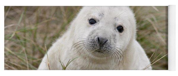 Grey Seal Pup Yoga Mat