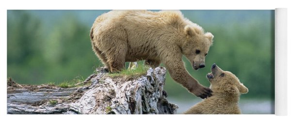 Grizzly Sisters Playing Yoga Mat