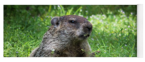 Groundhog Posing  Yoga Mat