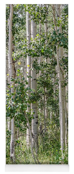 Grove Of Quaking Aspen Aka Quakies Yoga Mat