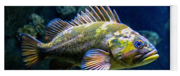 Grumpy Rockfish Yoga Mat