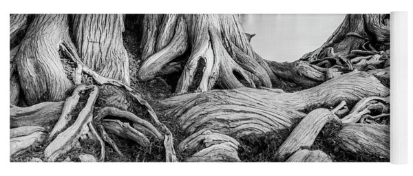 Guadalupe Bald Cypress In Black And White Yoga Mat