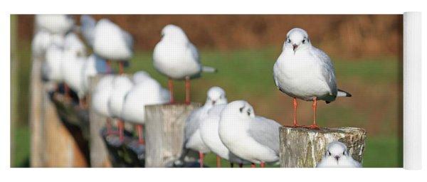 Gulls On A Fence Yoga Mat