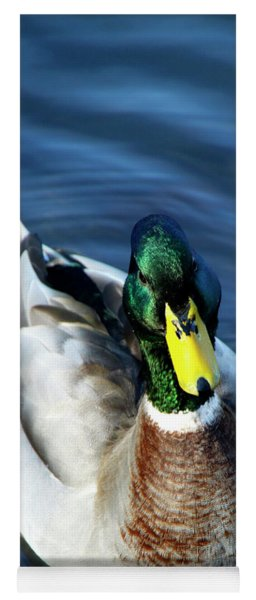 Handsome Male Mallard Yoga Mat