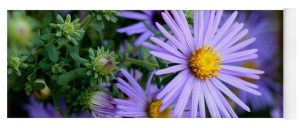 Hardy Blue Aster Flowers Yoga Mat