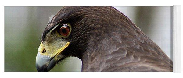 Harris's Hawk Profile Yoga Mat
