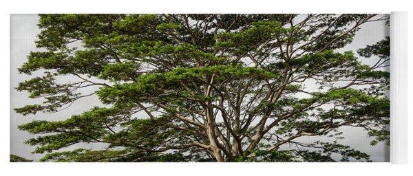 Hawaiian Moluccan Albizia Tree Yoga Mat