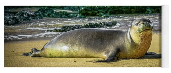 Hawaii'n Monk Seal Yoga Mat
