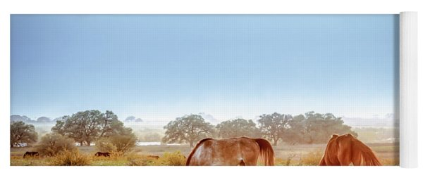 Yoga Mat featuring the photograph Hazy Field For Dinner by Melinda Ledsome