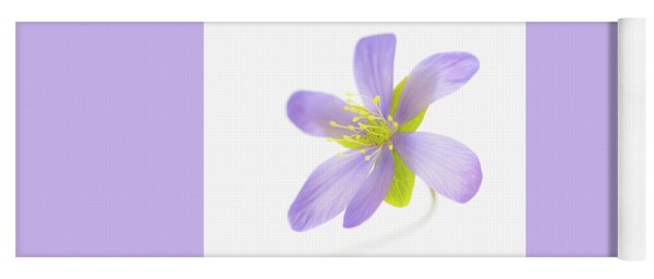 Hepatica On White Yoga Mat