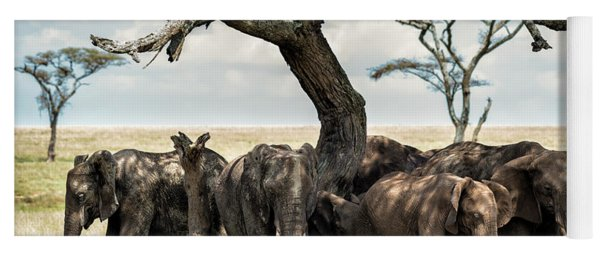 Herd Of Elephants Under A Tree In Serengeti Yoga Mat