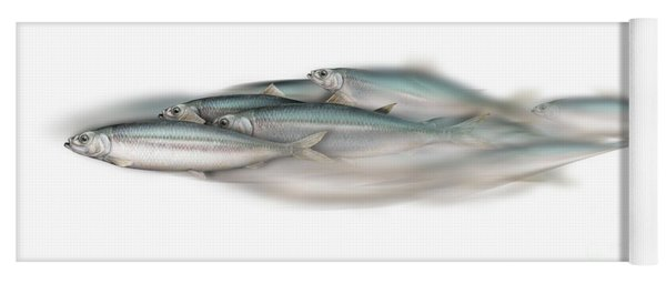 Herring School Of Fish - Clupea - Nautical Art - Seafood Art - Marine Art - Game Fish Yoga Mat