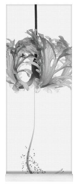 Hibiscus Schizopetalus Against A White Background In Black And White Yoga Mat