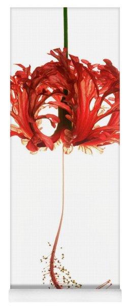 Hibiscus Schizopetalus On White Yoga Mat