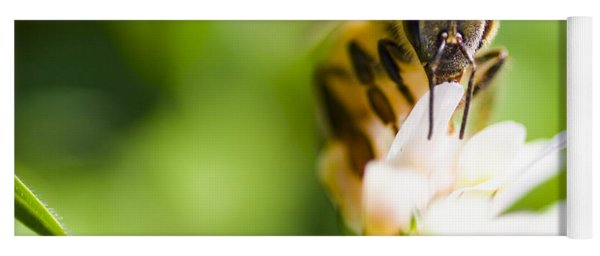 Honey Bee On Clover Flower Yoga Mat