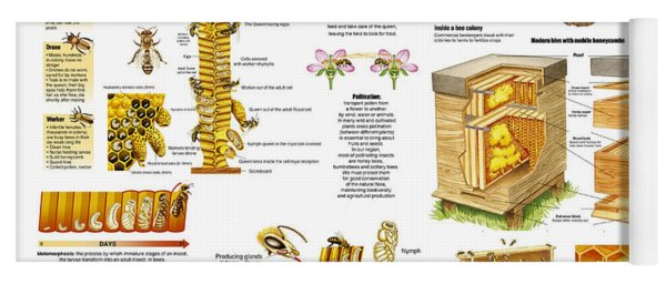 Honey Bees Infographic Yoga Mat