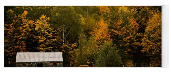 Horse Under Golden  Fall Foliage Yoga Mat