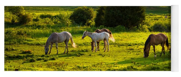 Horses Grazing In Evening Light Yoga Mat