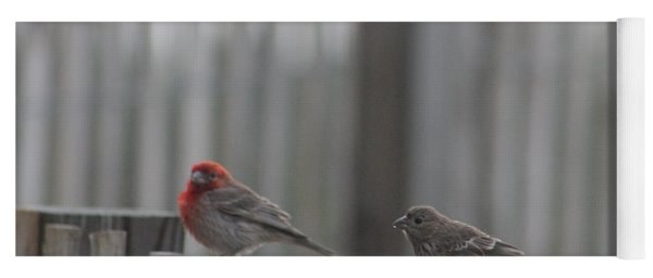 House Finches On The Fence Yoga Mat