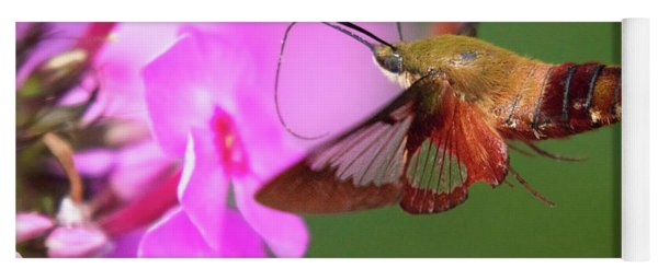 Hummingbird Moth Feeding 2 Yoga Mat