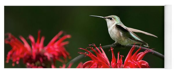 Hummingbird On Flowers Yoga Mat