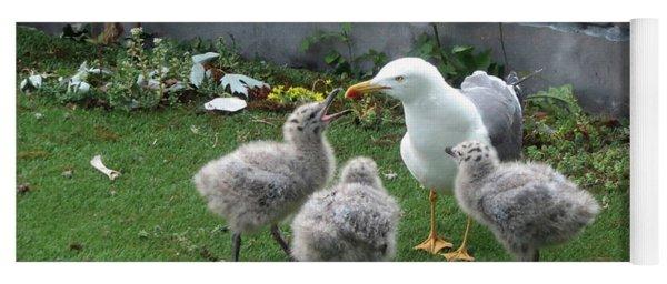 Hungry Baby Seagulls Yoga Mat