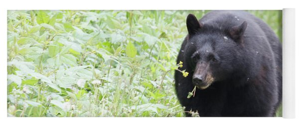 Yoga Mat featuring the photograph Hungry Bear by Eyes4Nature