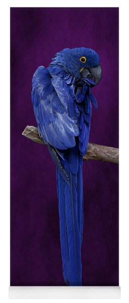 Hyacinth Macaw Panoramic Yoga Mat