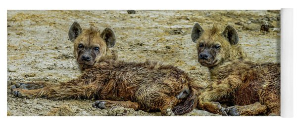 Hyenas In The Serengeti Yoga Mat