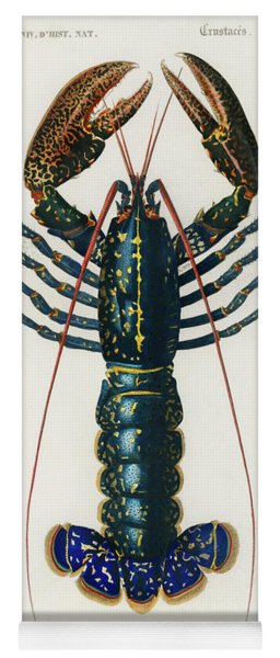 Illustrated Crimson Crawfish - Palemon Ornatum Yoga Mat