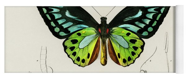 Illustrated Green Birdwing - Ornithoptera Priamus Yoga Mat