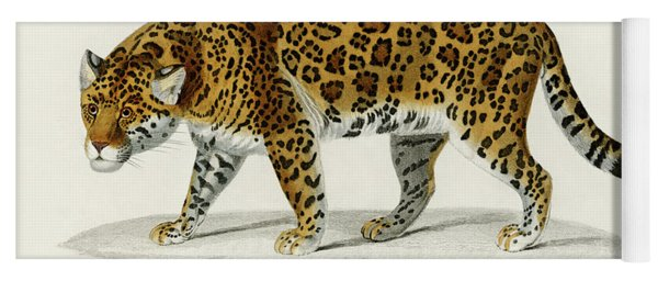 Illustrated Jaguar - Panthera Onca Yoga Mat