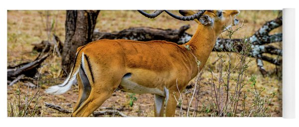 Impala On The Serengeti Yoga Mat