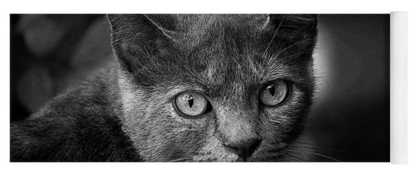 In The Know Pet Art Bw Yoga Mat