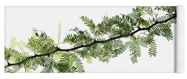 Indian Needle Bush Tree Leaves Yoga Mat