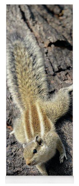 Indian Palm Squirrel 01 Yoga Mat
