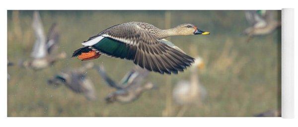 Indian Spot-billed Duck 01 Yoga Mat