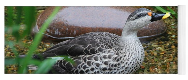 Indian Spot-billed Duck Yoga Mat