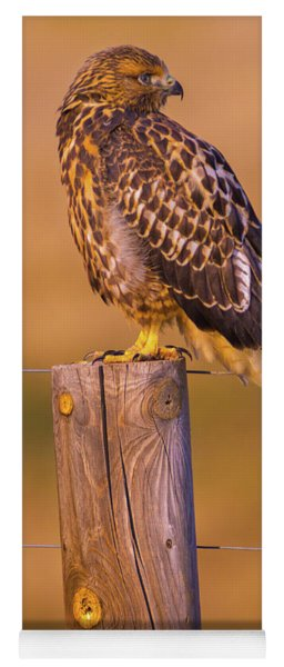 Intermediate Morph Swainson's Hawk Yoga Mat