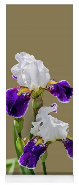 Iris Germanica In Purple And White Yoga Mat