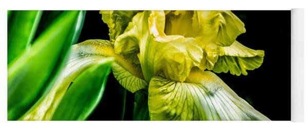 Yoga Mat featuring the photograph Iris In Bloom by Richard Ricci