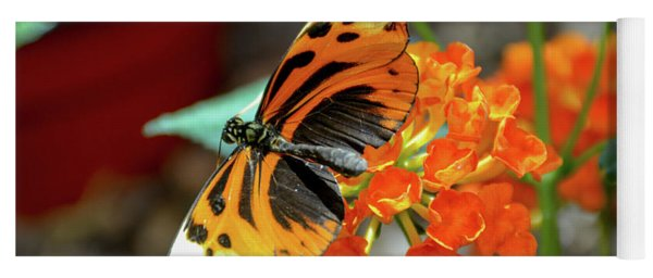 Ismenius Tiger Butterfly Yoga Mat