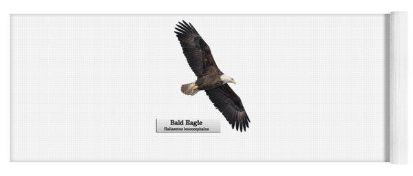 Isolated Bald Eagle 2018-1 Yoga Mat
